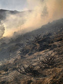 Disastrous consequences of forest fires — Stock Photo