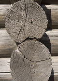 Old wooden cut texture — Stockfoto
