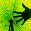 Palm leaf with human body part in back side — Foto Stock