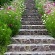 Stock Photo: Stairs with flowers