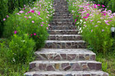 Stairs with flowers — Stock Photo