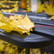 Detail of yellow autumn leaf — Foto Stock