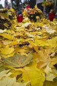 Yellow autumn leafs on cemetery — Foto Stock