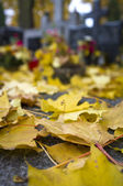 Autumn leafs on cemetery — Stock Photo