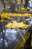 Yellow autumn leaf on marble bench — Stockfoto