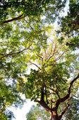 Hojas verdes con cielo — Foto de Stock