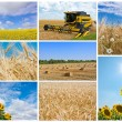 Image collection of harvesting — Stock Photo