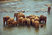 Herd of elephants taking bath in rough river on sunny day — Stock Photo