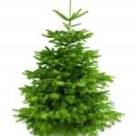 árvore de Natal perfeita fresco sem ornamentos — Foto Stock