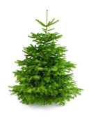 Perfect fresh Christmas tree without ornaments — Stockfoto
