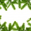 Fresh fir twigs border — Stock Photo #7669586