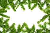 Fresh fir twigs border — Stock Photo
