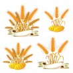 Wheat ears — Stock Vector #6869739