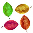 An illustrative image of leaves on white background — Foto Stock