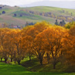 A photo of Autumn landscape — Stock Photo