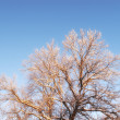 Winter tree — Stock Photo #7407496