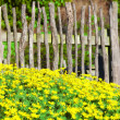 Fence, flowers, blue sky and garden — 图库照片