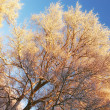 Winter tree at sunset — Stock Photo