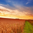Sunset at the countryside — Stock Photo