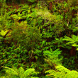 Rain forest — Stock Photo