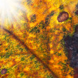A macro photo a leaf in sunset — Stock Photo