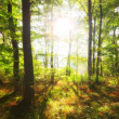 Autumn forest and sun - Stock Photo