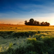 Sunset in the countryside — Stock Photo