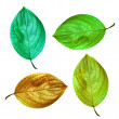An illustrative image of leaves on white background — Foto de Stock