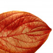 An illustrative image of leaves on white background — Стоковая фотография