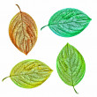 An illustrative image of leaves on white background — ストック写真