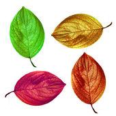 说明性的形象,在白色背景上的叶子 — 图库照片