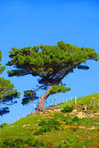 A photo of a lonely tree — Stock Photo