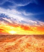 Coucher de soleil campagne — Photo