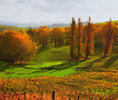 A photo of Autumn landscape — Stock Photo