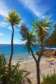 Palms, blue sky and sun — Stock Photo
