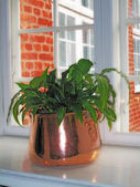 Plant in window — Stock Photo