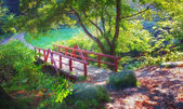 Small bridge in the forest — Stock Photo