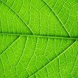 Green leaf — Stock Photo #7101809