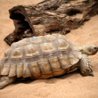Big old turtle in a Tenerife zoo park - Stock Photo