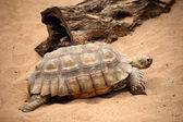 Big old turtle in a Tenerife zoo park — Stock Photo