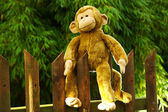 Stuffed Happy Ape Sitting on a Fence in the Sun — Stock Photo