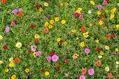 花のじゅうたん. — ストック写真