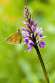 Butterfly on the flower. — Stock Photo