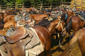 Stampeding horses. — Stock Photo