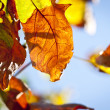 Autumn Leaves — Stock Photo #7167176