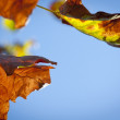 Autumn Leaves — Stock Photo #7167245