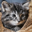 Stock Photo: Lovely fluffy kitten