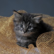 Lovely fluffy kitten — Stock Photo #6838707
