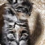Lovely fluffy kitten — Stock Photo