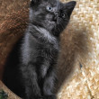 Black Kitten — Stock Photo #6839103